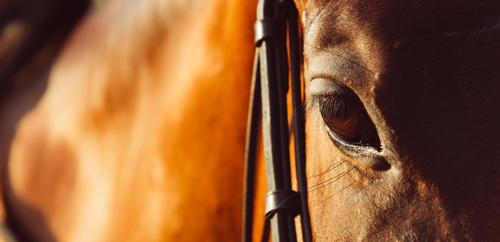 Fortis Equus paardenmarketing